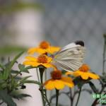 15-1.藝賞花卉.攝影蔡愛香