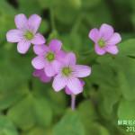 15-10.藝賞花卉.攝影蔡愛香