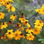 15-12.藝賞花卉.攝影蔡愛香