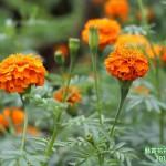 15-14.藝賞花卉.攝影蔡愛香