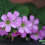 15-3.藝賞花卉.攝影蔡愛香