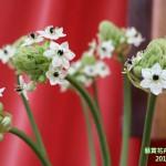 15-6.藝賞花卉.攝影蔡愛香