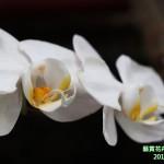 15-7.藝賞花卉.攝影蔡愛香