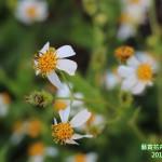 15-9.藝賞花卉.攝影蔡愛香