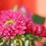 7-4.藝賞花卉.攝影蔡愛香