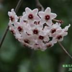 9-4.藝賞花卉.攝影蔡愛香
