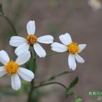 9-5.藝賞花卉.攝影蔡愛香
