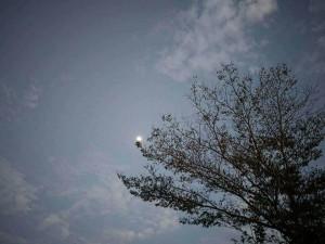 風 雲 月 樹