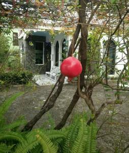 孤獨的石榴花