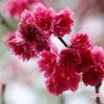 10-2.藝賞花卉/攝影蔡愛香