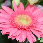 15-11.藝賞花卉.攝影蔡愛香