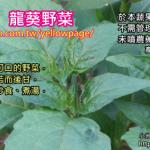 4-4.龍葵野菜