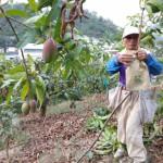 5-2.退休牧師賴光雄管理芒果園套封袋。