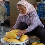 8-3.小米園蔬果園的金煌芒果