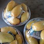 8-7.小米園蔬果園的金煌芒果