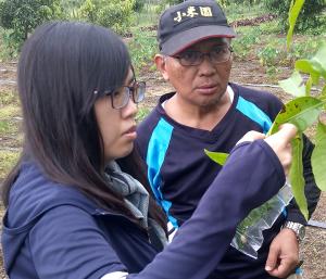屏東縣府農業處植物病蟲研究人員向小米園蔬果園園主賴約翰解說愛文芒果葉面病蟲與防治