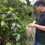 3-1屏東縣農業處農產品檢驗人員於小米園蔬果園採樣