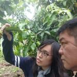 3-3.友善耕作人員賴經理(右)屏東縣府農業處植物病蟲研究人員觀察珍珠芭樂蟲害(左)