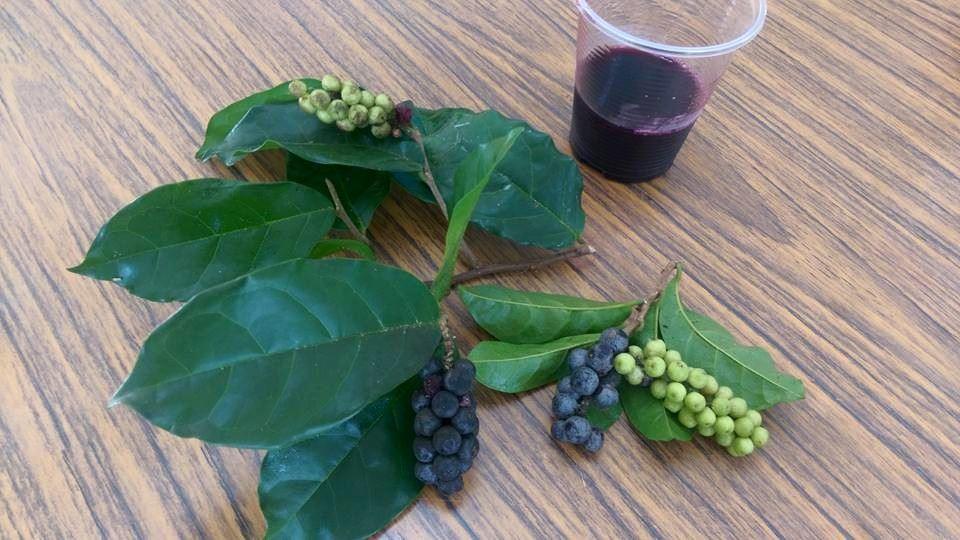 Guritim(排灣族一種植物)1